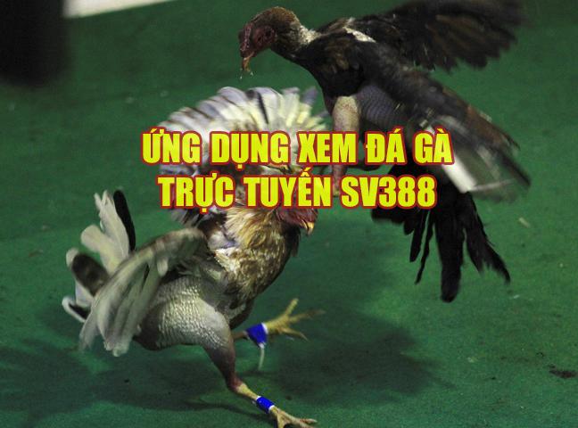 Ứng dụng xem đá gà trực tuyến từ SV388