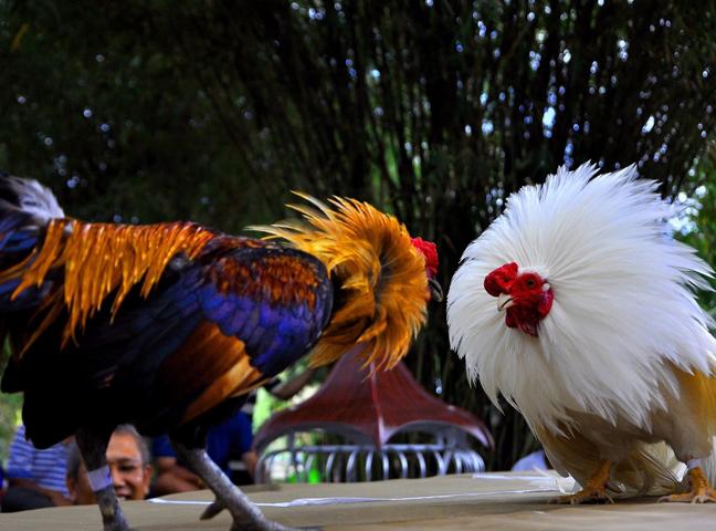 5 lưu ý quan trọng khi lựa chọn nhà cái đá gà trực tuyến