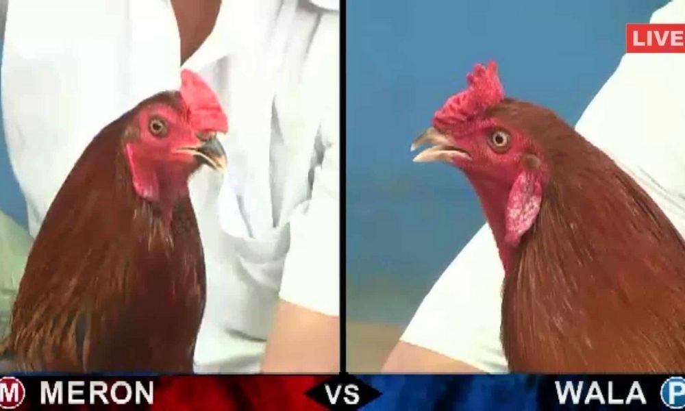 Đá gà trực tuyến tại Becoparts