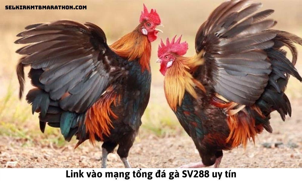 SV288 – Link vào mạng tổng đá gà SV288 uy tín
