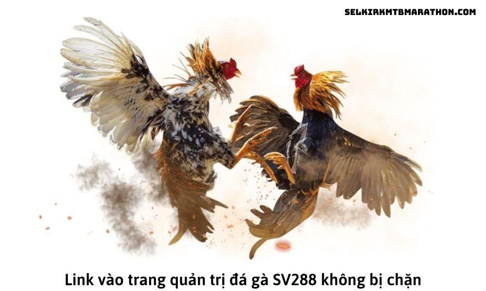 Link vào trang quản trị đá gà SV288 không bị chặn